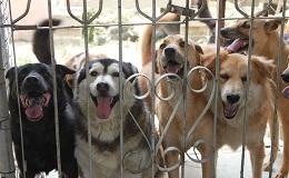 狗來富家園-探訪志工班