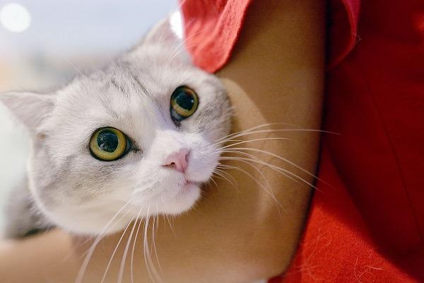 當我們摸摸抱抱寵物時,常會與寵物閒話家常,牠們真的聽得懂嗎? 林猷威/攝