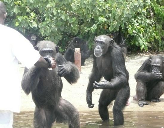 非洲喀麦隆动物图片