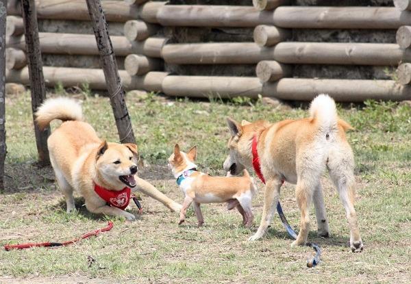 动物展示自己的地盘