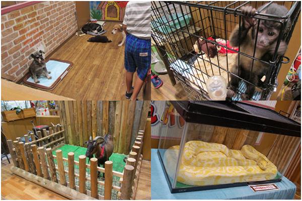 動物或是被囚禁在狹小空間,或是欠缺環境豐富化。右下圖的黃金蟒專供遊客掛在脖子上拍照,每次收費1,000日幣(約300台幣)。 取自網路