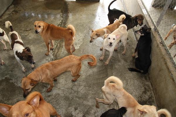 流浪动物零安乐死,如何送养和处置流浪狗,成为重要课题. 萧士塔/摄