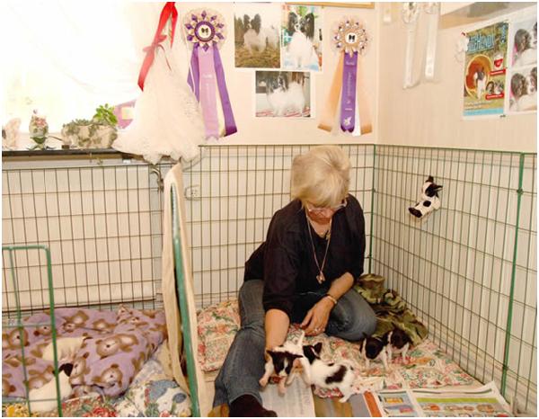 动物饲养责任保险