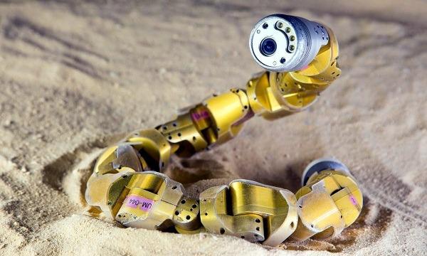 科学家现在利用机器动物