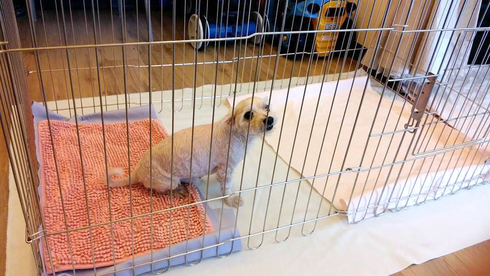 郭瑋婷的狗狗Nemo在主人外出時,就會乖乖在固定的空間休息、上廁所。 取自好寶貝寵物居家用品臉書
