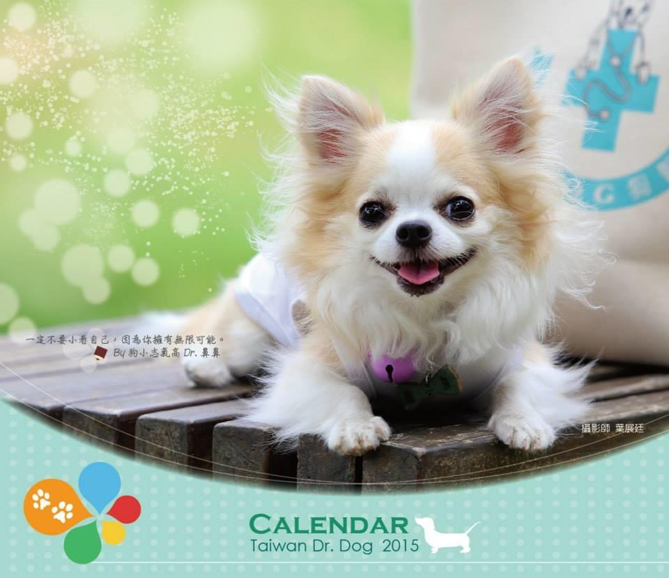 动物辅助活动及治疗协会(简称台湾狗医生协会)自2001