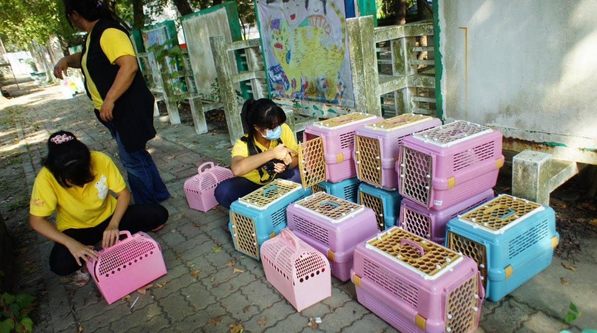 志工們細心將兔子一隻隻裝進籠裡,準備帶回愛兔之家。 取自愛兔協會