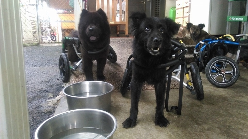 犬山居目前照顧約200多隻癱病狗,但照顧的人力與空間都相當有限。 取自犬山居