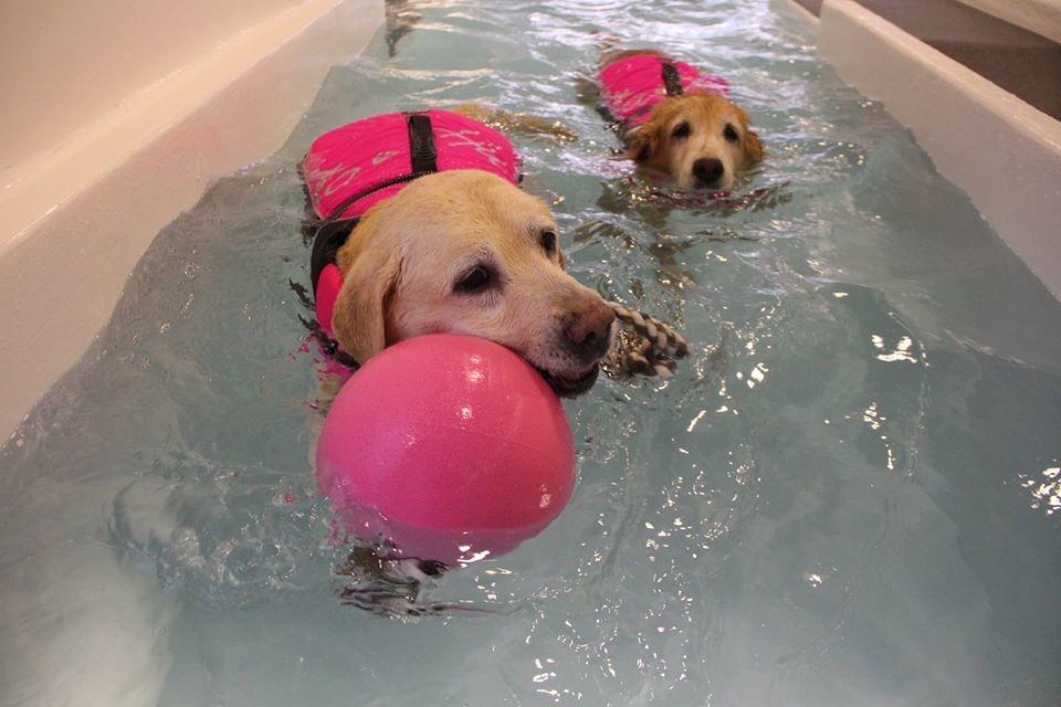 3年前開幕的北歐寵物旅館森林館,日前分館「游泳館」也開幕了!談到成立的初衷,老闆娘Cher說都是為了喜歡游泳的愛犬Level(圖前方的拉拉)。 取自北歐寵物旅館游泳館