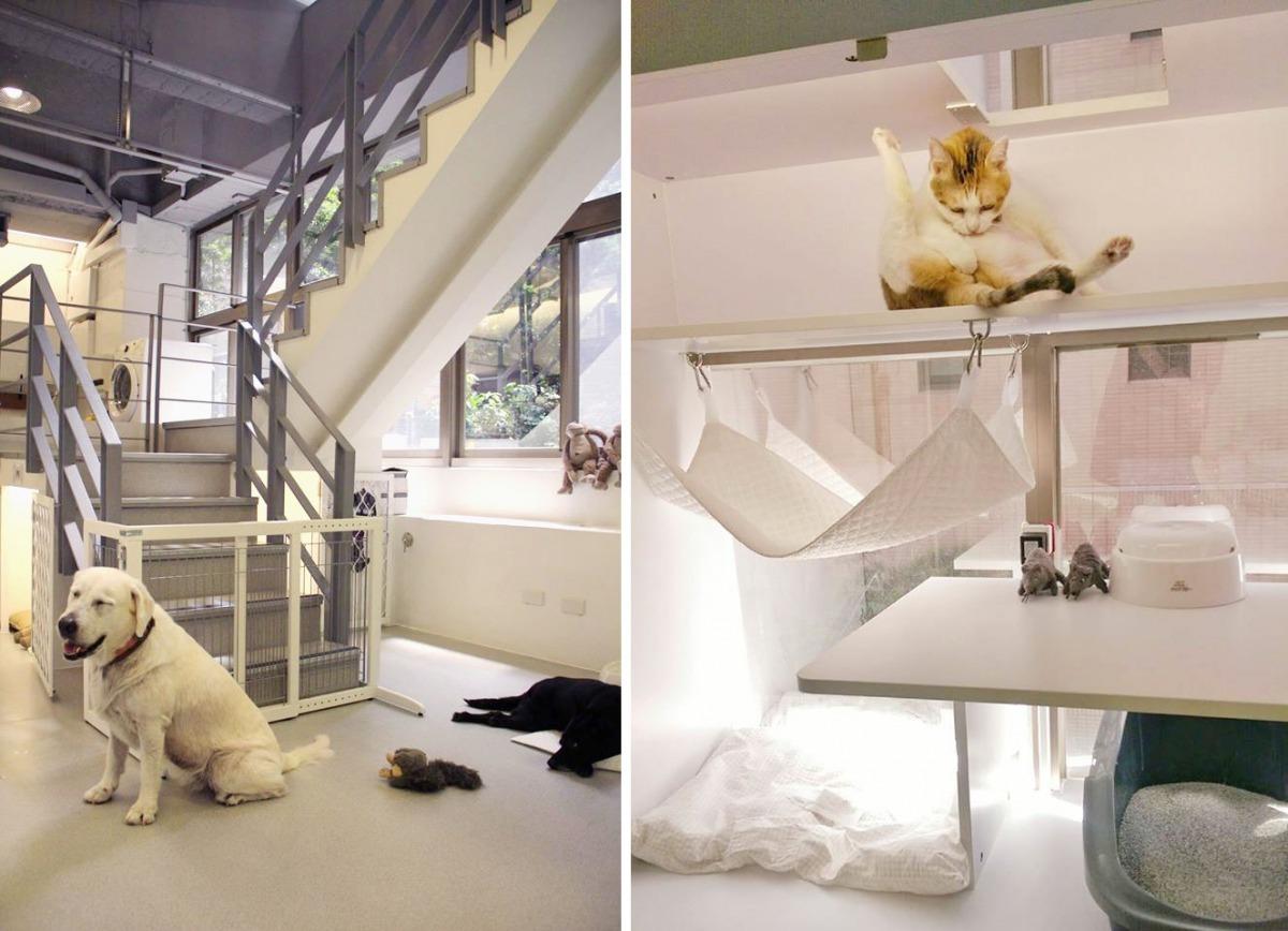 北歐游泳館在一樓,對於高齡狗、輪椅狗跟髖關節有問題的狗都很方便,有一側是大片落地窗、採光非常棒,二樓的貓房也有吊床讓貓咪能睥睨樓下的人群。 取自北歐寵物旅館游泳館