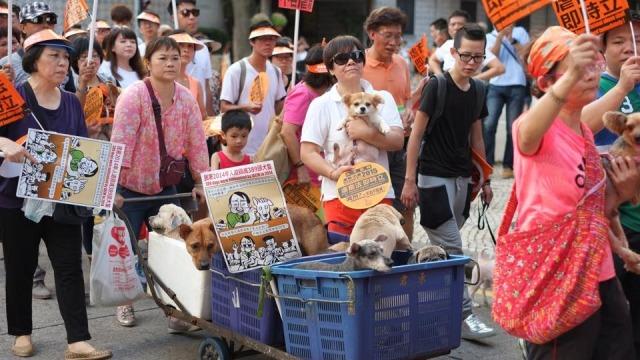 記者 何宜/綜合報導 1998年台灣制定《動物保護法》,歷時至今法條內容與其他國家相比,算是相當嚴謹,也時常為中港澳的動保人士所欽羨。不過澳門近日也傳出好消息,終於在7月4日通過《動物保護法》,將於9月初生效;而中國7月2日也通過了新修訂的《野生動物保護法》,增加了對野生動物的管理規範、將於明年1月1日實施!  事實上,澳門與動物虐殺相關的規範,最早出現在1957年訂立的市政條例第170條,嚴禁以狗及貓作為食療用途,但罰款只有20~200元,而且政府無權介入處理。2007年時澳門民政總署推出《擁有動物法》