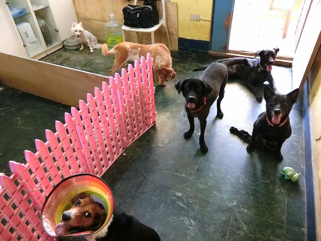 AT北投救援中心舊址的辦公室,你找到Judy了嗎? Animals Taiwan/提供