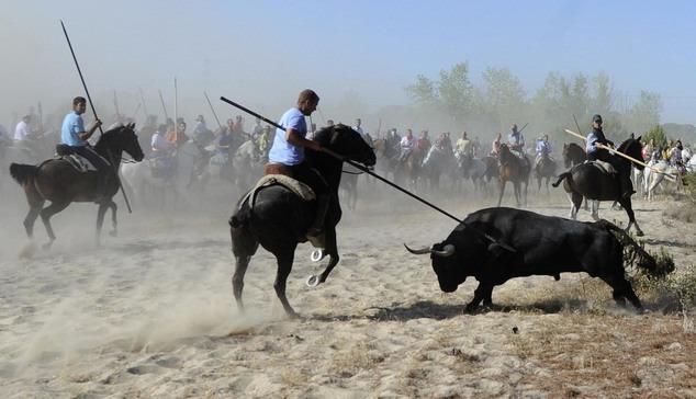 記者 何宜/綜合報導 每年春末到秋初是西班牙的鬥牛季節,這項傳統文化也因為其對待牛隻的殘忍,而一向為世人詬病。我們曾報導過西班牙的托爾德西利亞斯(Tordesillas)小鎮,每年9月中為了紀念聖母,會由一群人把一頭牛趕到街頭,一路朝牠刺長矛直到牛痛苦地死去,而這項傳統在日前被當地政府下令禁止,此外近來因為西班牙注重環保的左派運動逐漸抬頭,鬥牛比賽可能也將面臨絕跡的命運!   根據紐約時報報導,西班牙自治區卡斯提亞-雷昂(Castile and Len)政府下令禁止托爾德西利亞斯小鎮每年的「Toro d