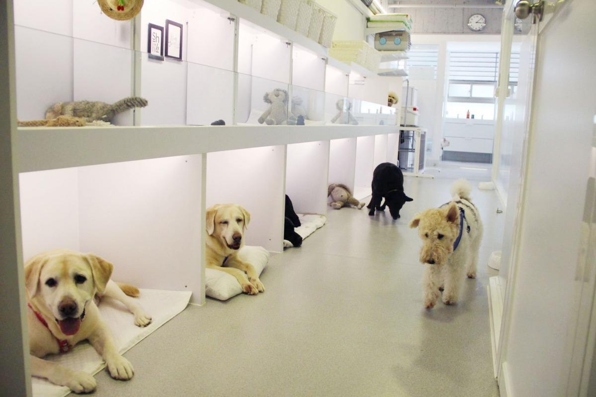 老闆娘Cher說,狗狗原始就是穴居動物,所以房間設計成像是一個個洞穴一般,平常除了吃飯睡覺會關門外,其他時間都是開放的喔! 取自北歐寵物旅館游泳館
