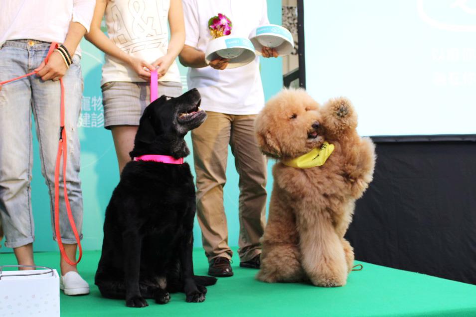 台灣寵物飼糧品牌「唯寵」推出全台第一個「客製化」寵糧,提出「最適合的,才是最好」的概念。 何宜/攝