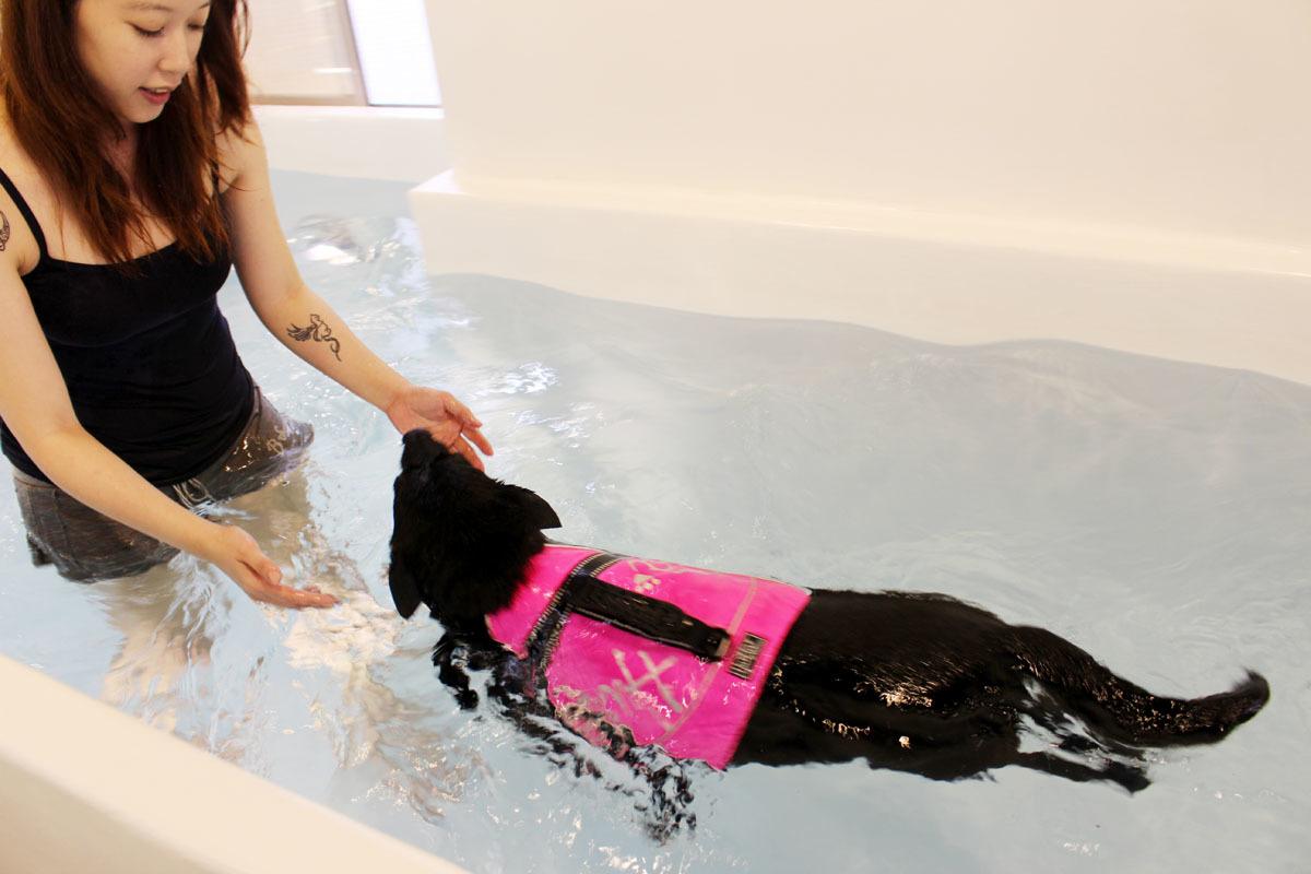 保母香香說,游泳池最多一次可以2隻大狗一起游,而同一個家庭的狗因為不會發生爭吵,所以也可以視體型一起游。 何宜/攝