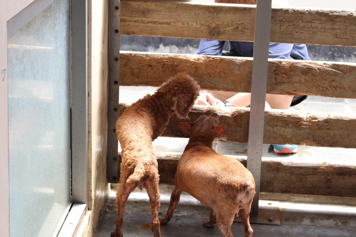 破获大宗繁殖场 该开心还是头痛? | 台湾动物新闻网