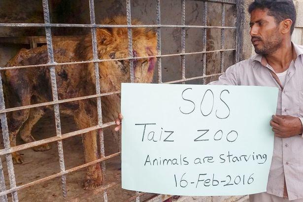 葉門內戰持續一年多,終於在今年4月同意停火,不過國內一間動物園裡頭的動物卻因為飢餓相繼死亡。   翻攝自鏡報
