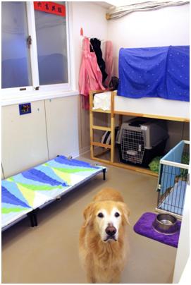 大型犬房的雙人床上舖是夜間寵物保母的床。 何宜/攝