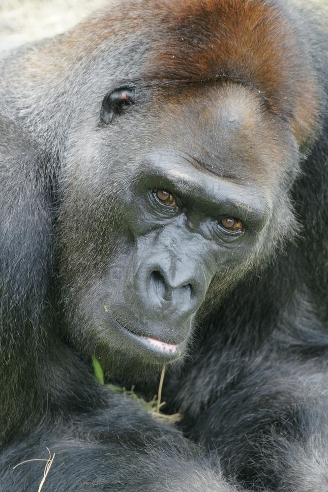 动物园银发照护 猩猩水獭求安宁