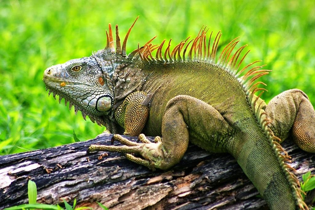 增设不同造景使环境更像动物的原始栖地,甚至美的像一幅画,让爬行类的
