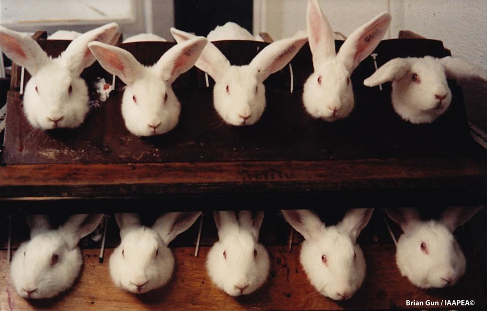 反化妆品动物实验 网路连署表民意