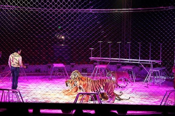 动物马戏团禁令 墨西哥国会通过