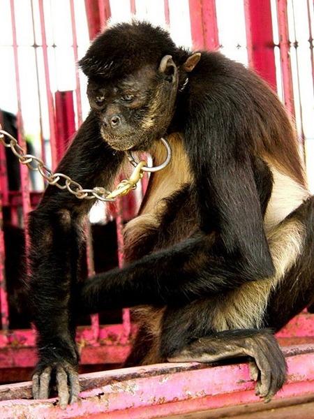 还展示了巴利马戏团健康动物的画面