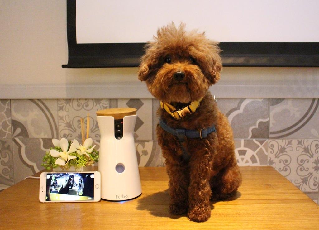 相較於市面上的寵物攝影機,Furbo最大也最實用的功能,是當機器偵測到狗狗吠叫時,Furbo會推播提醒飼主,讓飼主能在第一時間判斷狗狗吠叫的原因,並在狗狗停止吠叫後投遞零食,「已經有不少使用者告訴我們,這確實幫助他們大大改善狗狗無端吠叫的問題,終於不會再被鄰居抗議了」。 在研發過程中,設計團隊不斷向熊爸取經,因此Furbo的所有設計都是以「正面聯想」為原則。另外,張友辰也一再強調,Furbo裝填零食的空間不大,因為它是互動玩具而非「自動餵食器」,他認為飼主如果超過一天以上不回家,不該把毛孩獨留在家,「這個