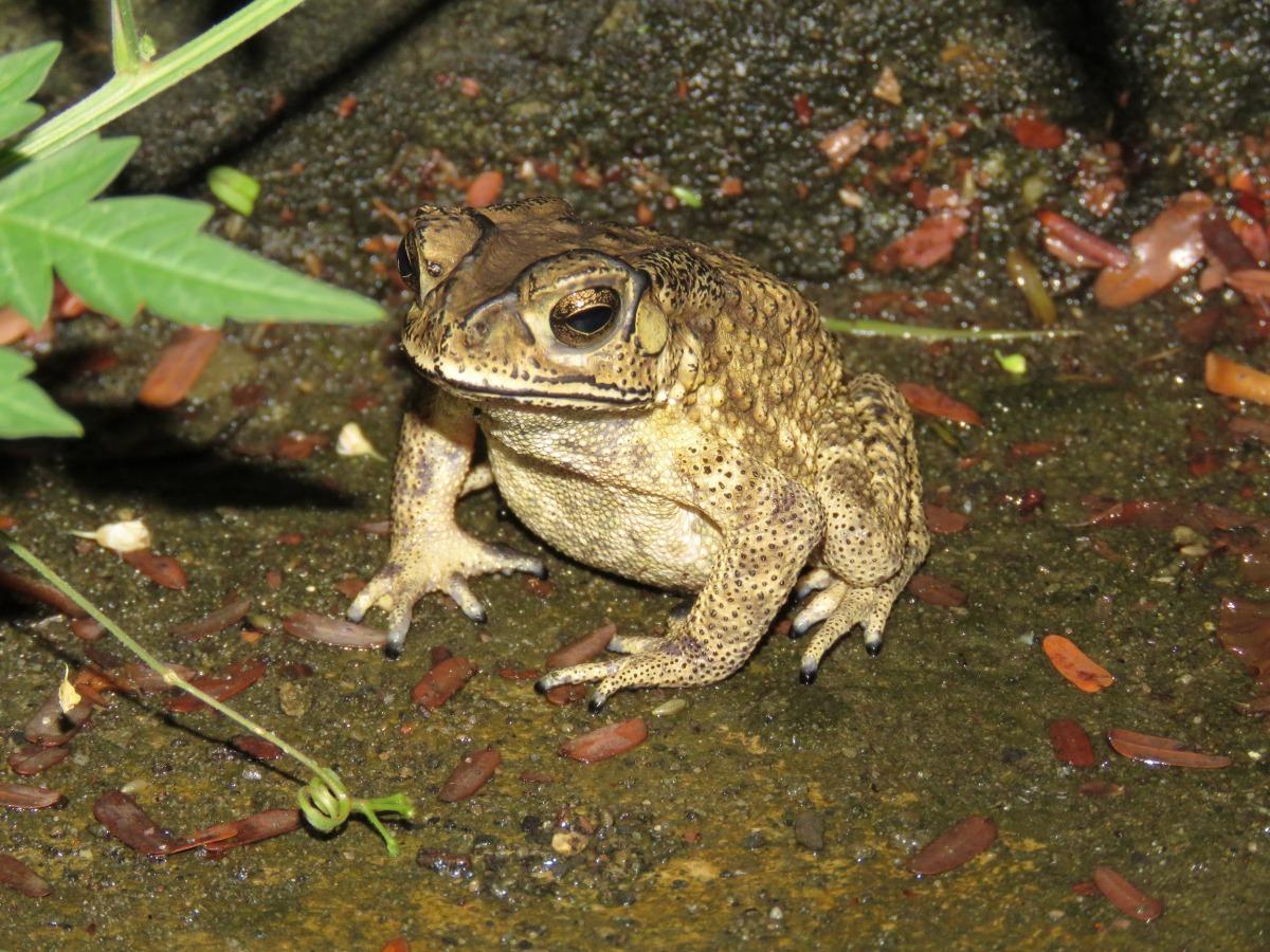 蛙 蛙 書 單