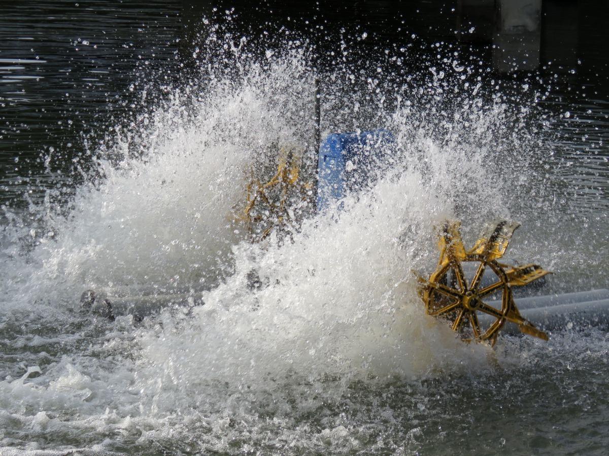水車等增氧設備又占水產養殖整體用電量6成以上。高維奇/攝
