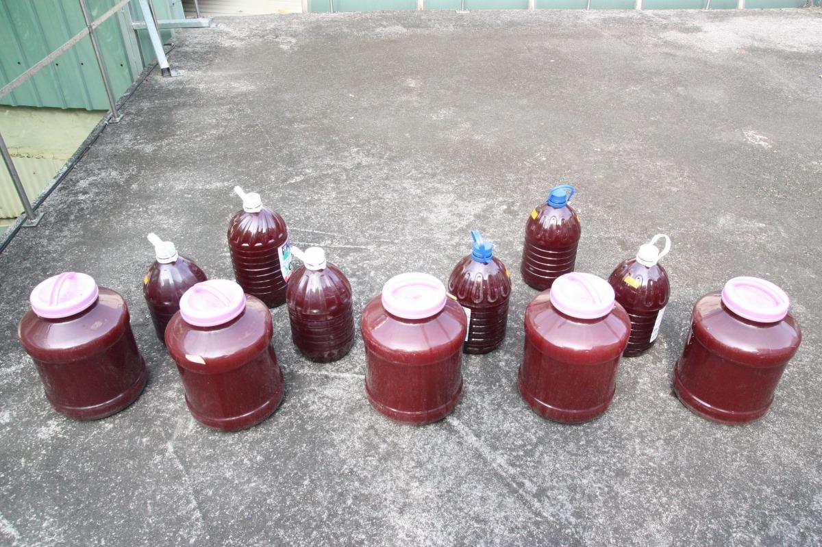 益生菌種類很多,圖為能改善水質的光合菌。高維奇/攝