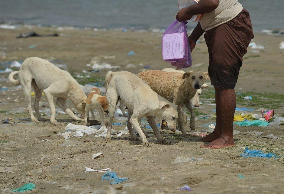 在「犬之島」上,一名漁夫正在餵食野狗們。「犬之島」上隨處可見被沖上岸的垃圾。 Photo: Express Tribune