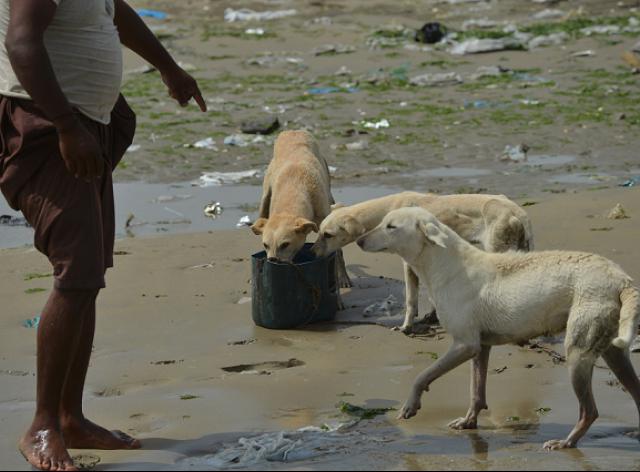 「犬之島」上因為沒有適合飲用的淡水,路過的漁夫會帶一桶飲用水給野狗們喝。 Photo: Express Tribune