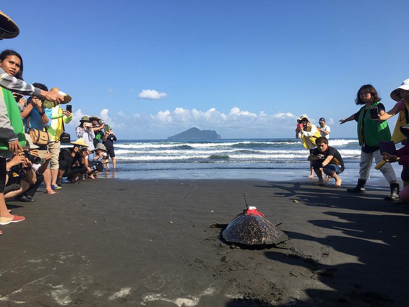 魷魚絲野放後下海照片,前面為龜山島。林務局提供。