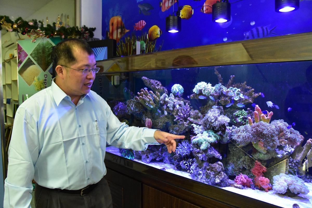 明道大學精緻農業學系何秉岳教授成功復育毛菇珊瑚(手指綠色處)。明道大學/提供