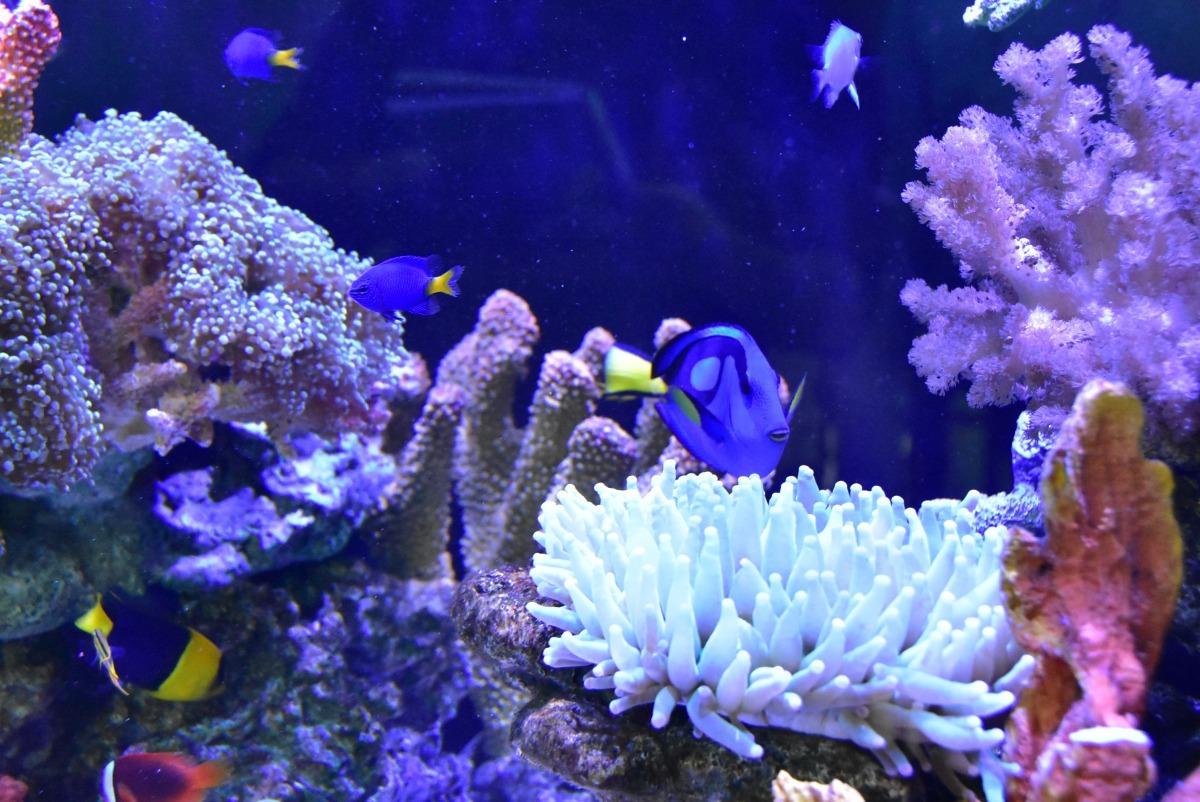 明道大學雲端水族箱內有15種珊瑚、20種魚類。明道大學/提供