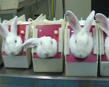 如果反对动物实验,怎麼会选择进入一个规定需要有动物实验的国家.