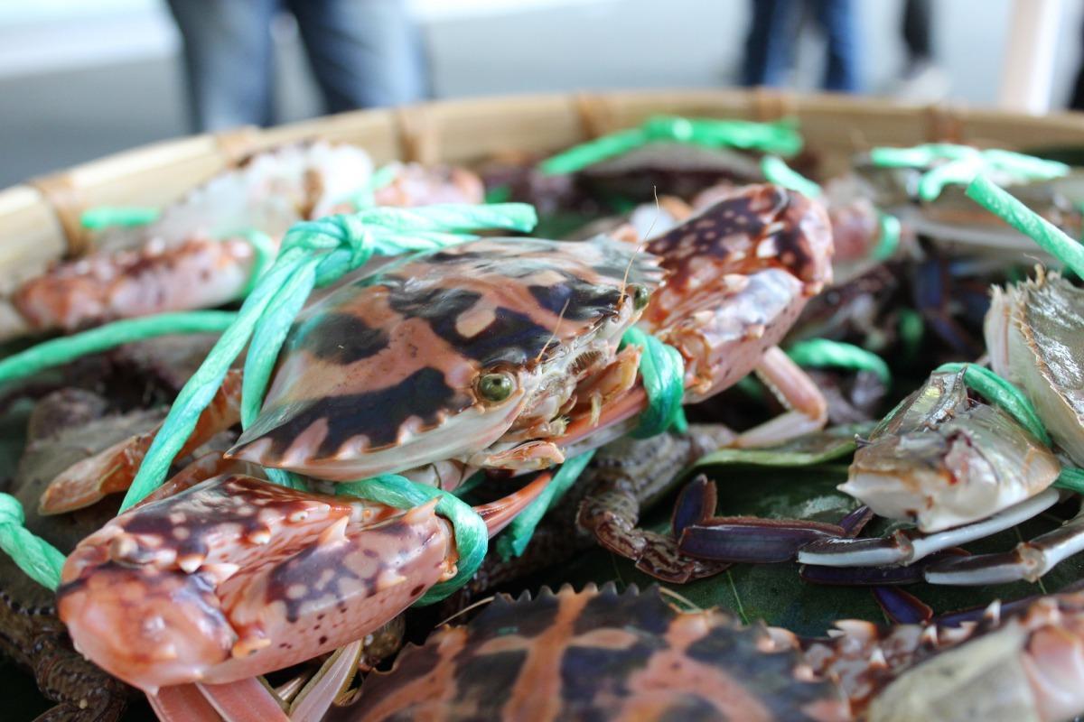 「萬里蟹」是花蟹、三點蟹與石蟳三種海蟹的統稱,圖為花蟹。雨林/翻攝