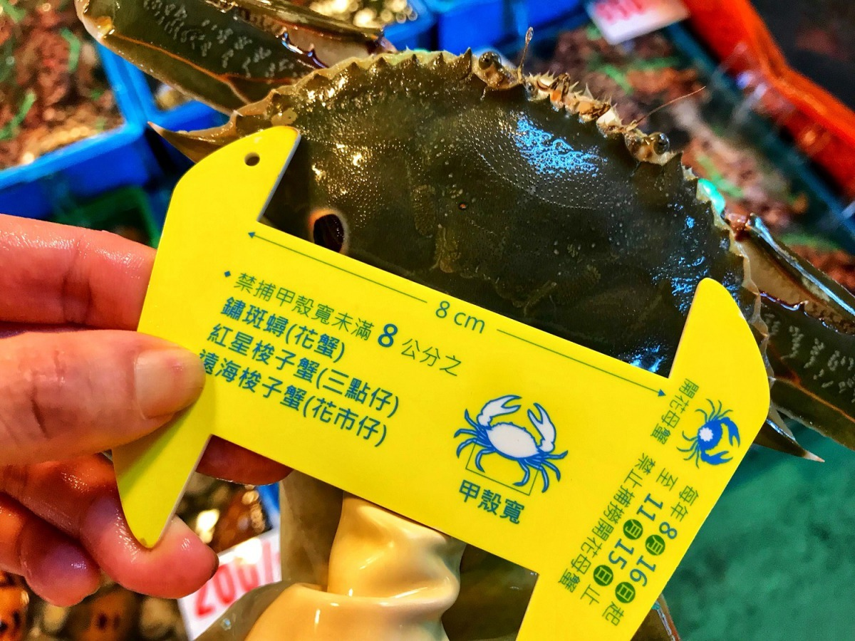 三點蟹、花蟹大於8公分者才可捕捉販售。圖為三點蟹。雨林/翻攝