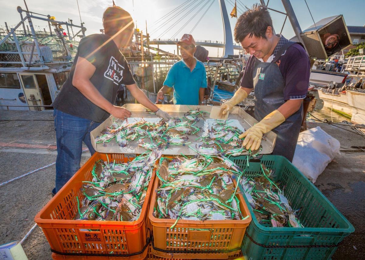 以傳統的籠具漁法捕蟹,能夠篩選掉抱卵母蟹跟幼蟹,不但友善海洋也重視生態永續,年年有蟹慶豐收。雨林/翻攝