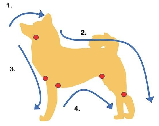 除了固定觸摸順序之外,淋巴結(圖中紅點處)也是需觀察注意的地方 (圖片來源:臺灣動藥)