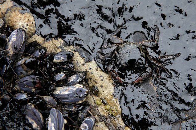 海洋生物大灾难