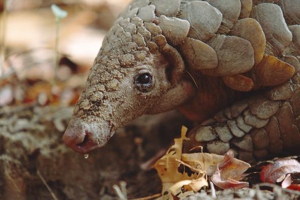 第六次大灭绝逼近 3/4物种将消失