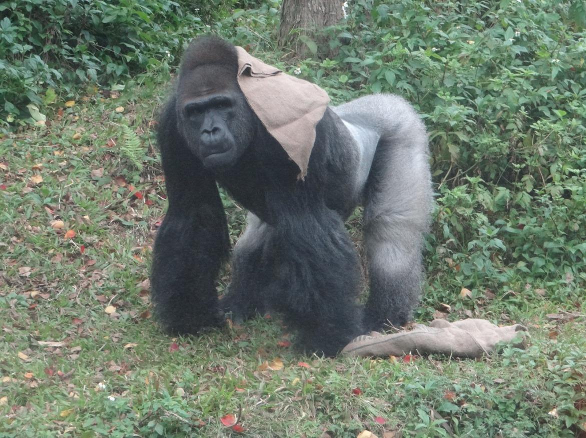 参访知名动物园,或主办国际会议,逐步深化与关键保育机构及专家的互动