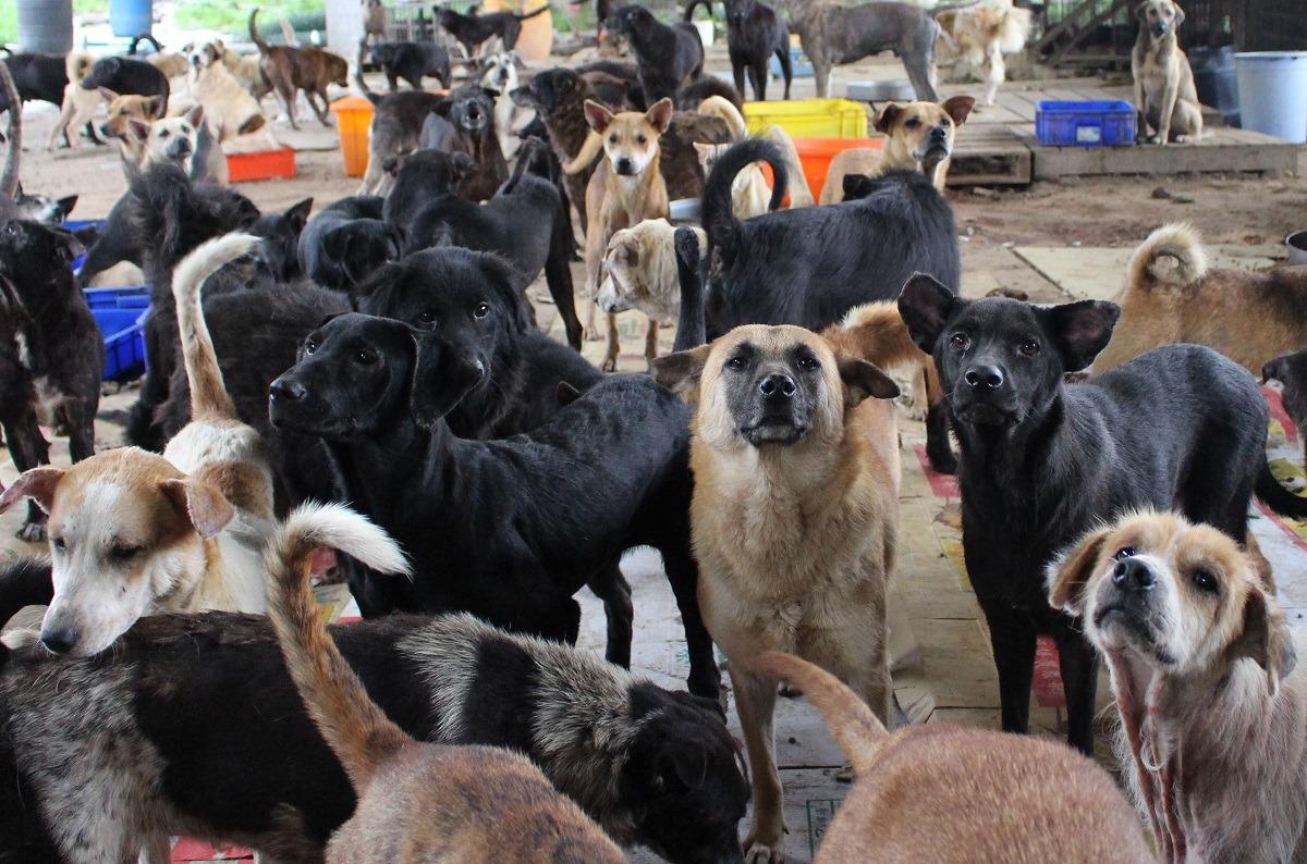 許多民間狗場超量收容、又沒有推動認領養,導致動物生活空間擁擠、髒亂。(示意圖) 台灣動物新聞網資料照(李娉婷/攝)