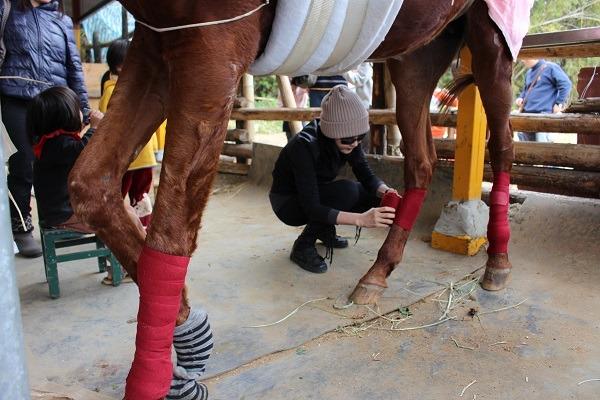 为避免马腿受伤,就算是健康的马匹