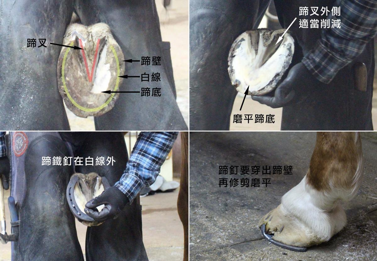 炽热烙铁 无痛钉马蹄 全凭功夫 | 台湾动物新闻网