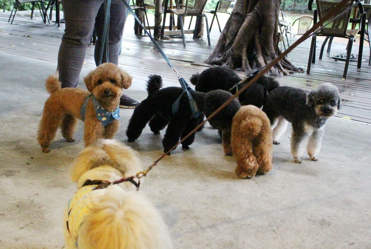 遛狗繫牽繩,不只是尊重他人,也是在保護狗兒。 示意圖,江幸芸/攝
