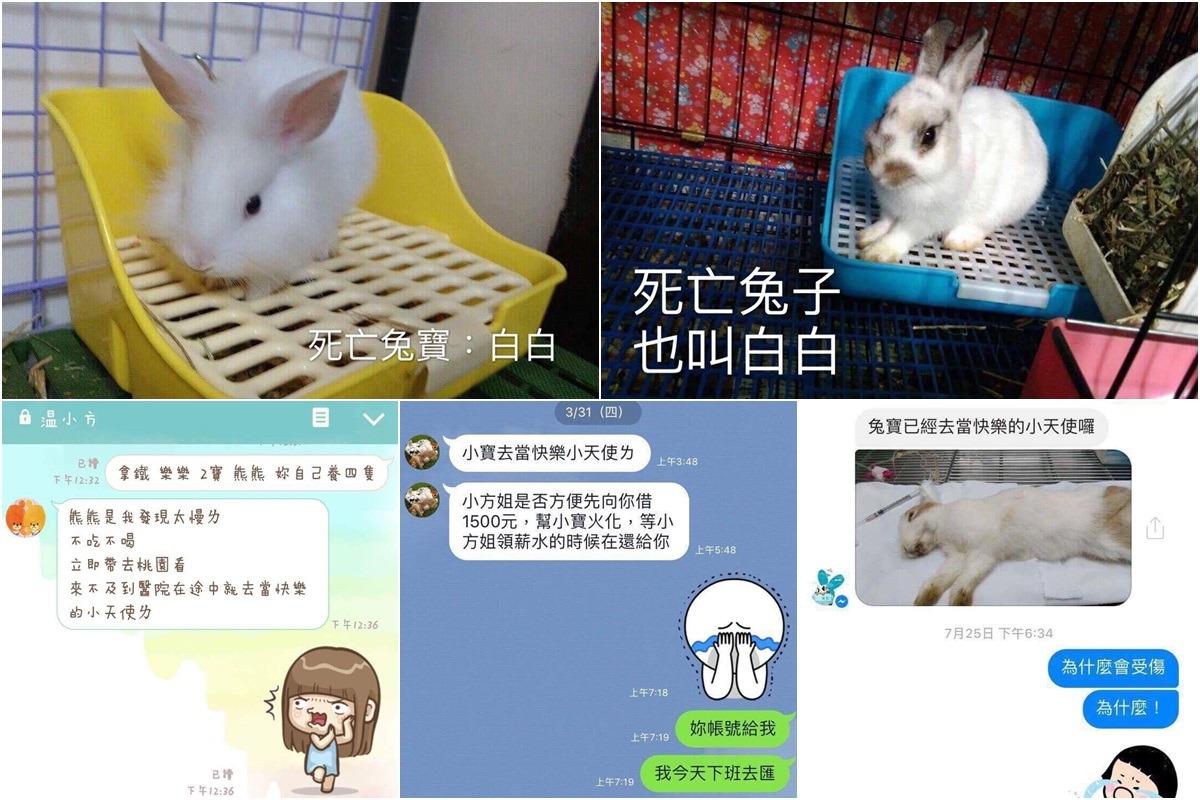 王小姐在兔友社團蒐集資訊,發現目前至少有5隻兔子在溫女接手後死亡,左上為讓事件曝光的「白白」。(對話紀錄左方發言人皆為溫女) 台灣愛兔協會/提供
